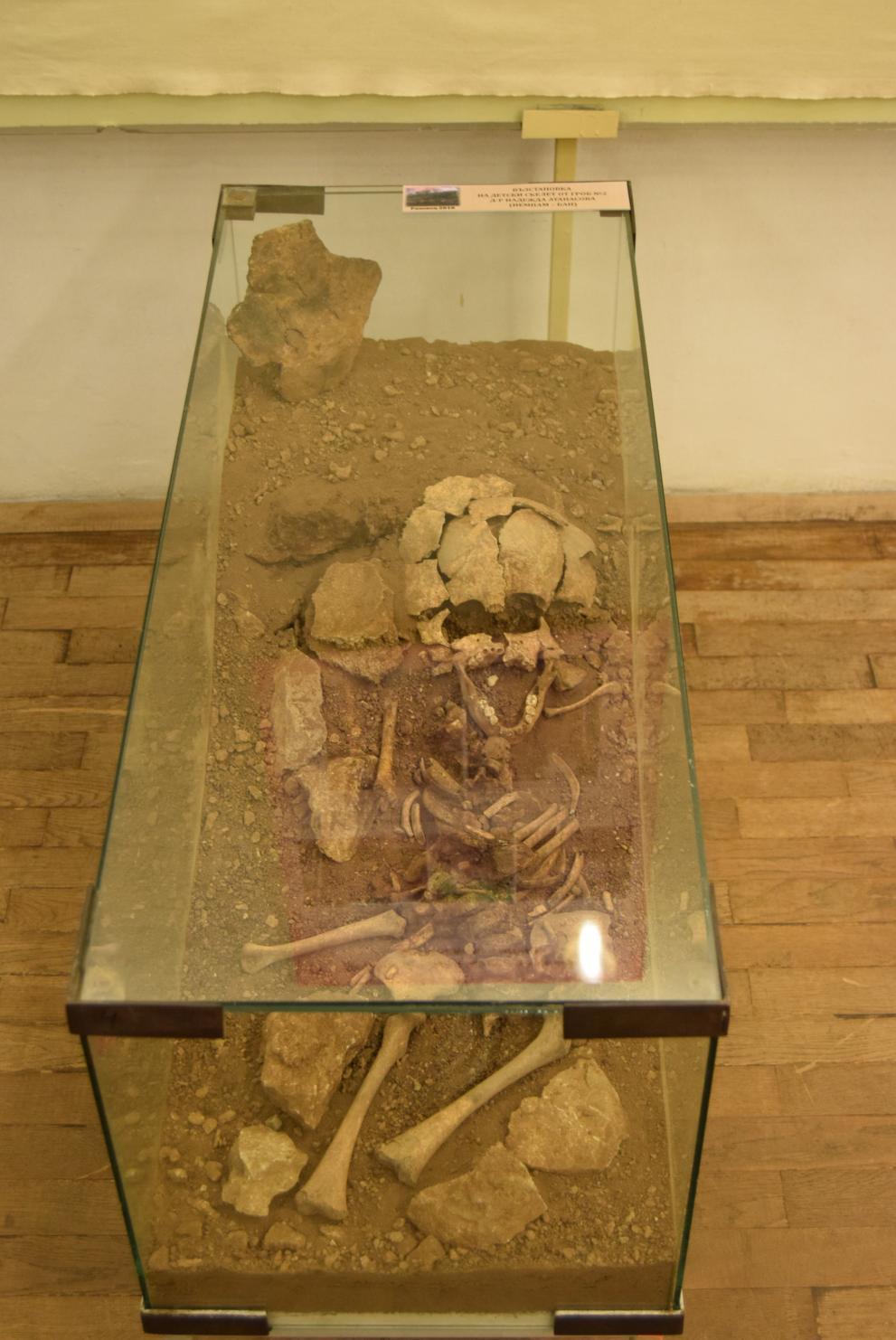 Горнооряховският музей показва в изложба най-древния гражданин на града
